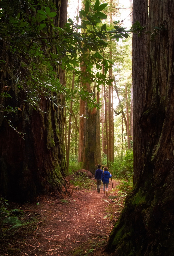 This image demonstrates the use of framing, with a clear foreground and background used to emphasize our subjects. Redwood Coast - Jedediah Smith Redwoods, ©Anita Sagastegui