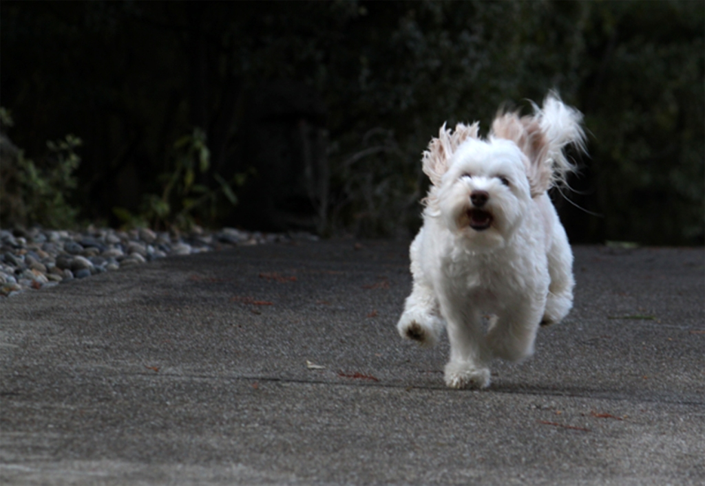 Pets are often a source for images focused on shutter speed.