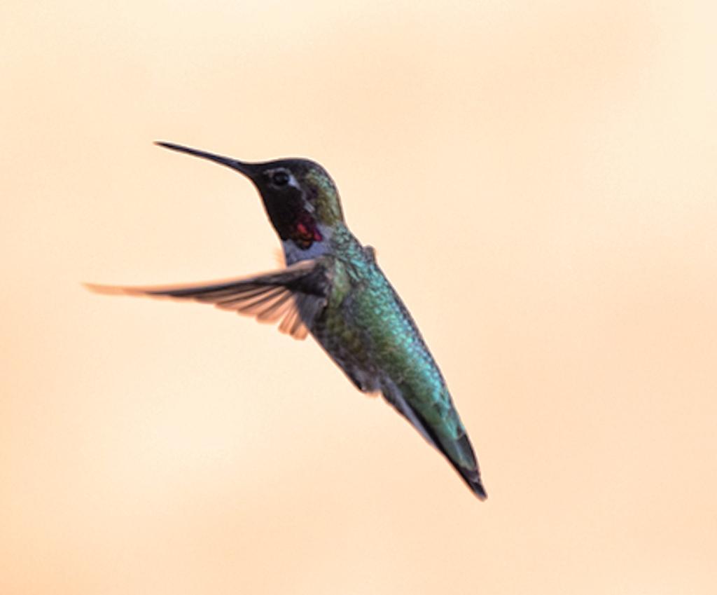 A still motion shot of a hummingbird by a student