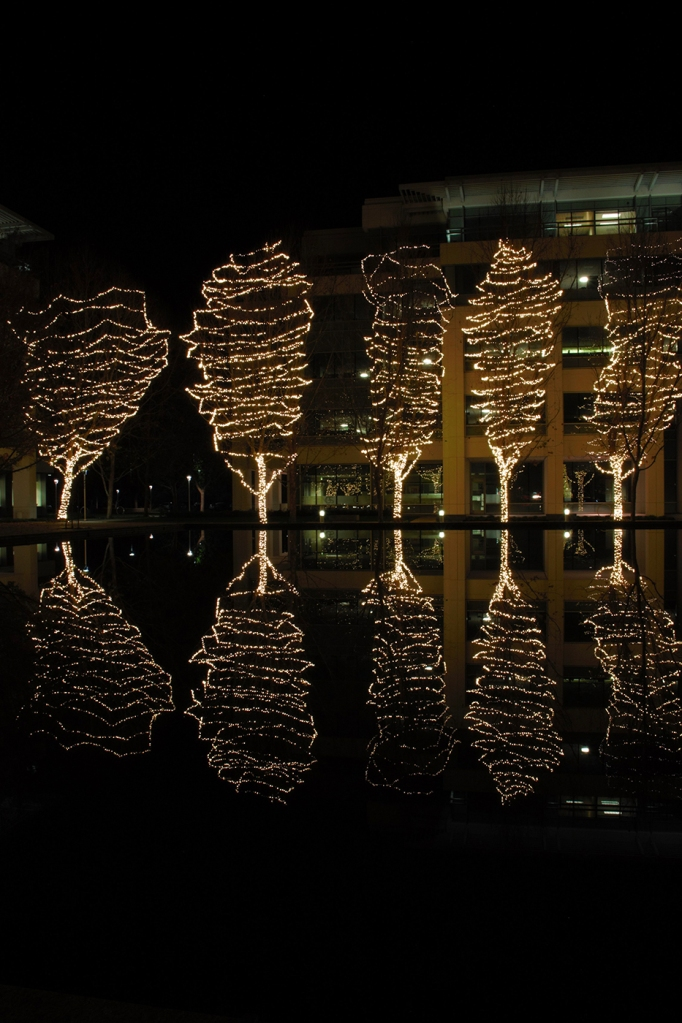 8th grade student's night photography: trees lit up for Christmas reflected in a lake